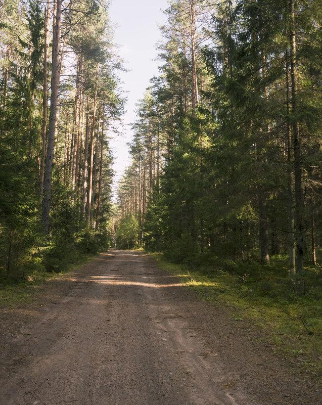 Лесная дорога - Aнна Зарубина