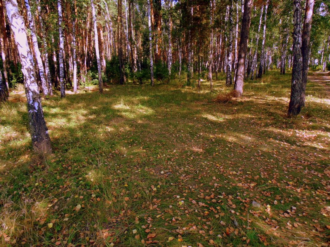 Осень наступила , осторожно осыпая поляну своим золотом . - Мила Бовкун