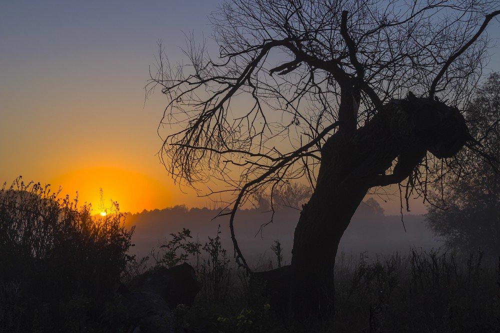 Пробуждение солнца - Сергей Корнев