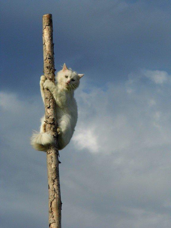 Кот в дозоре - Ирина Останина