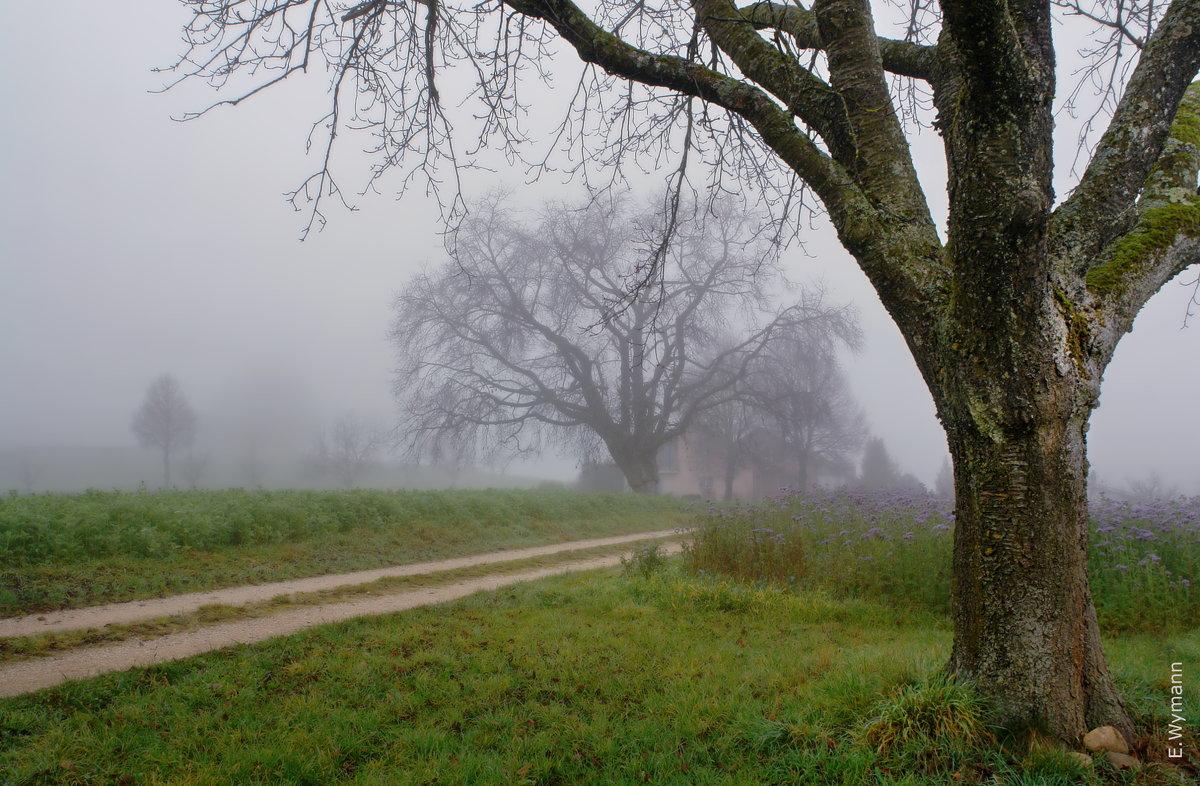 туман, осенний туман - Elena Wymann