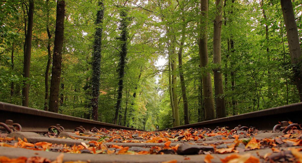 Дорога в парке - Alexander Andronik