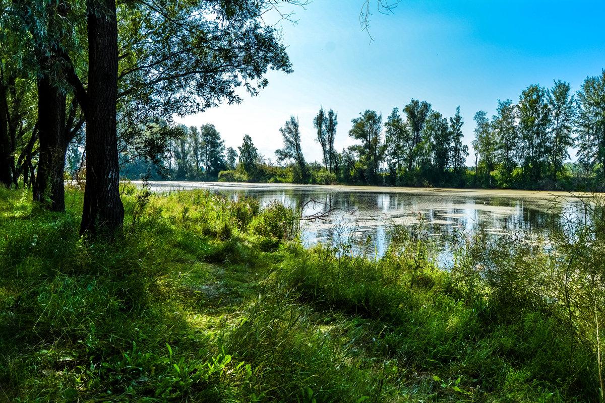 Лето ушло - Света Кондрашова