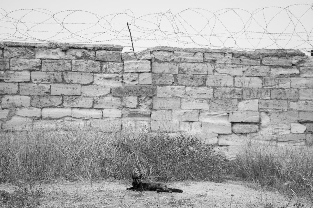 Заключенный - Daria Shablo