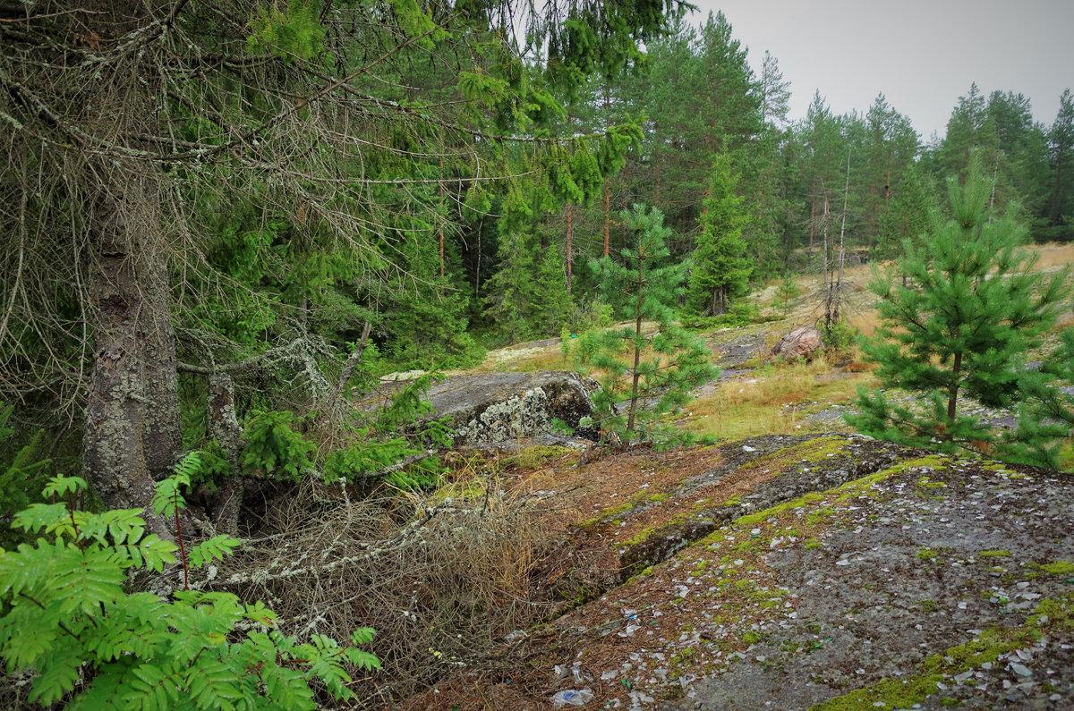 Полянка в лесу - Валерий Талашов