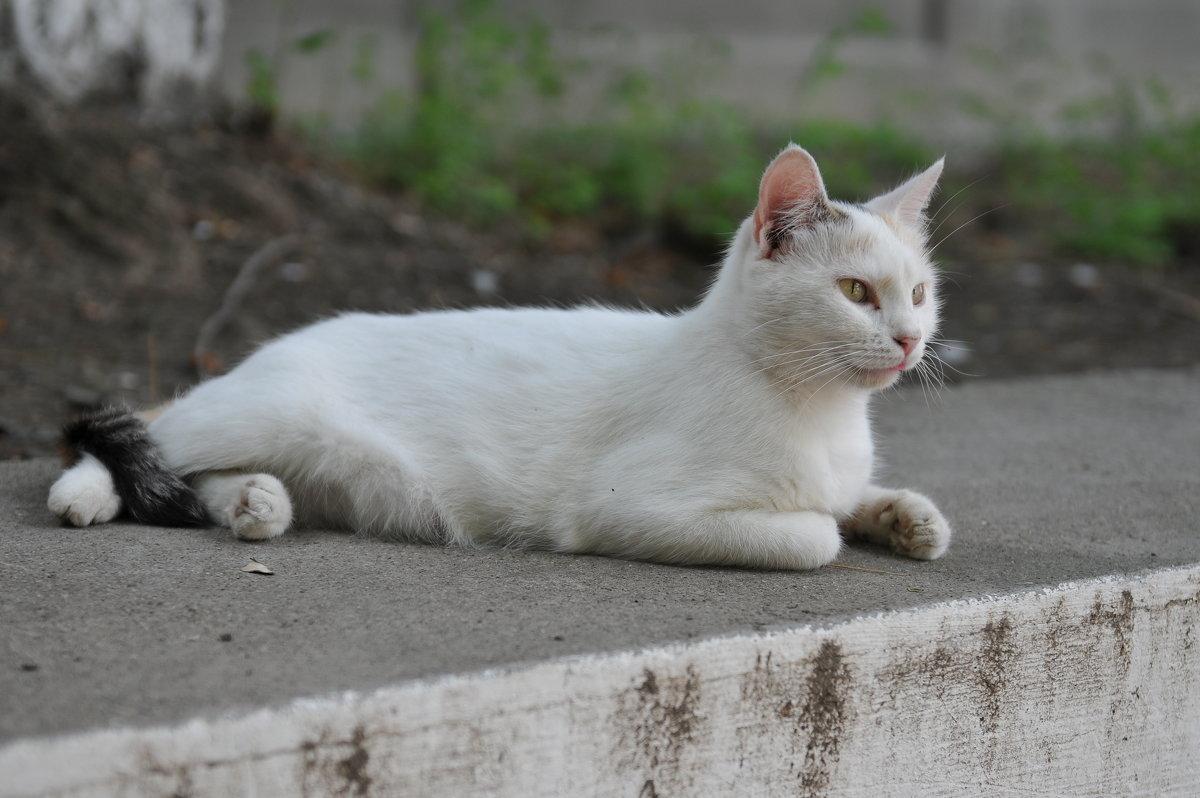 Уличный надзиратель - Александр Колесников