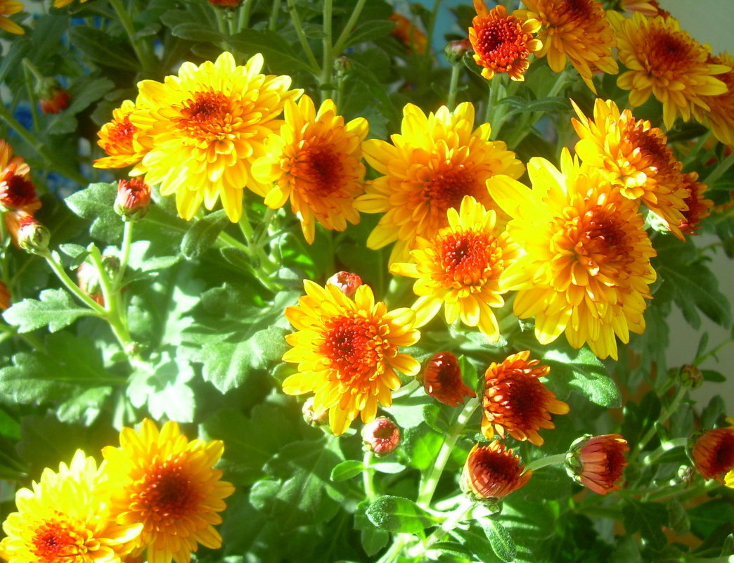 Осенние цветы - татьяна
