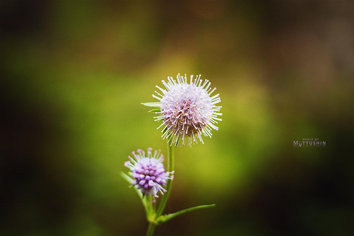 Цветок - D. Matyushin.