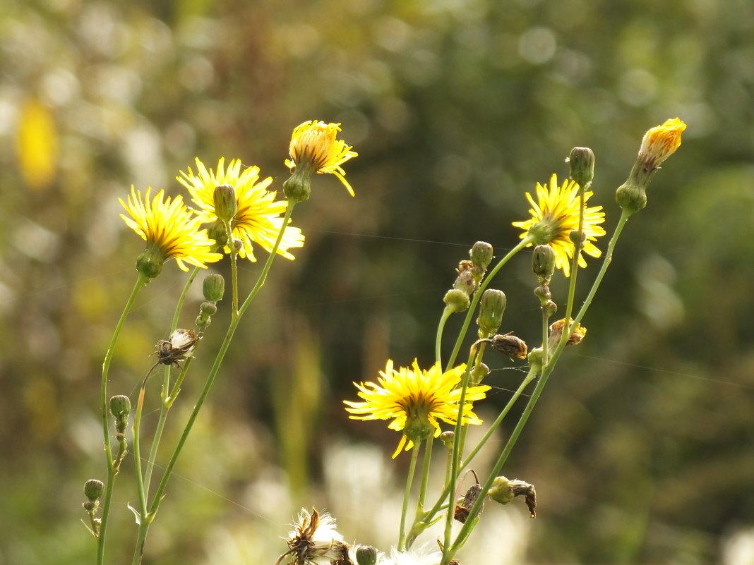 Полевые цветы - prokyl
