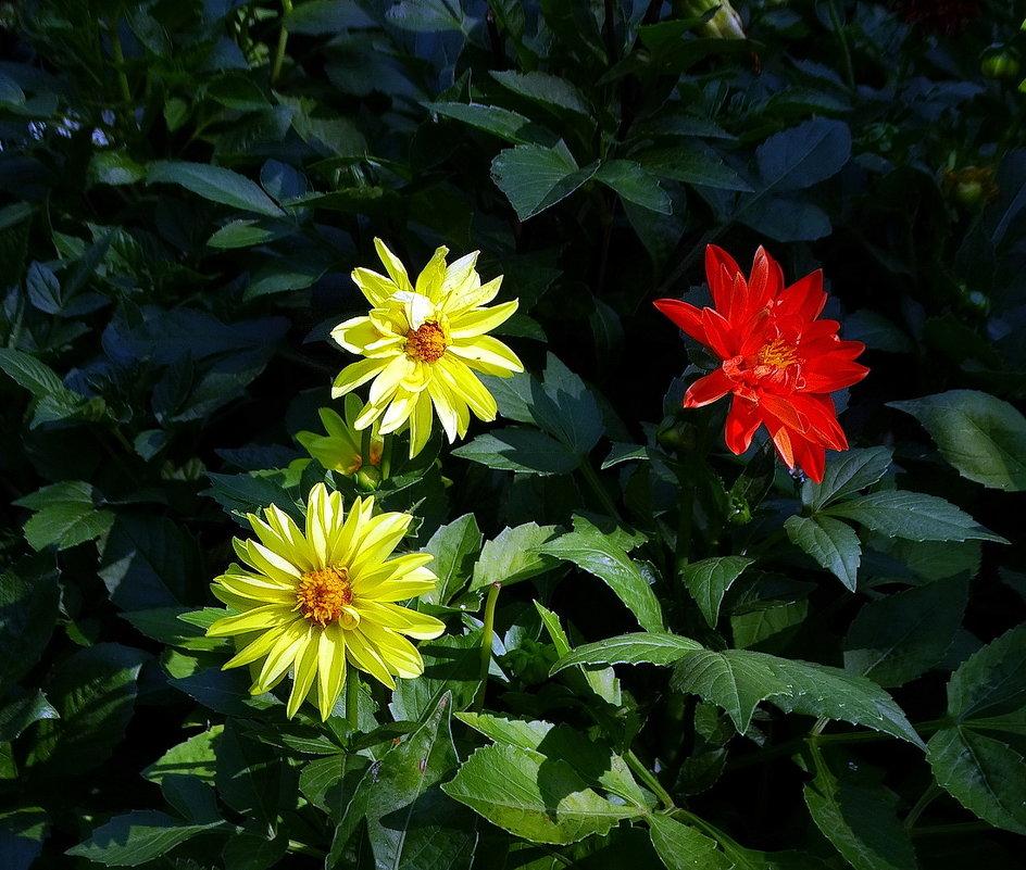 Цветы  ушедшего лета Фото №3 - Владимир Бровко
