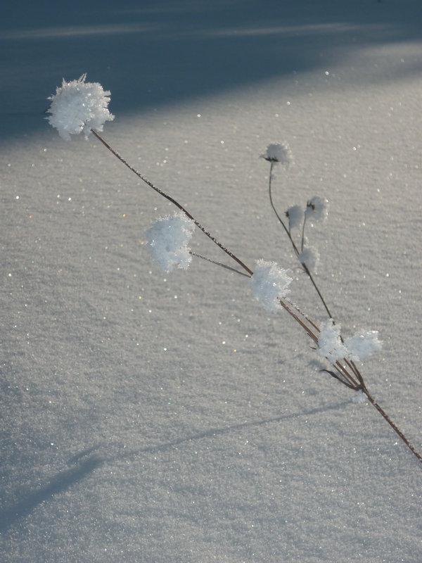 И зимой цветы цветут - Ирина Останина