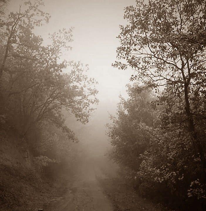 Туман - Дмитрий Сажин
