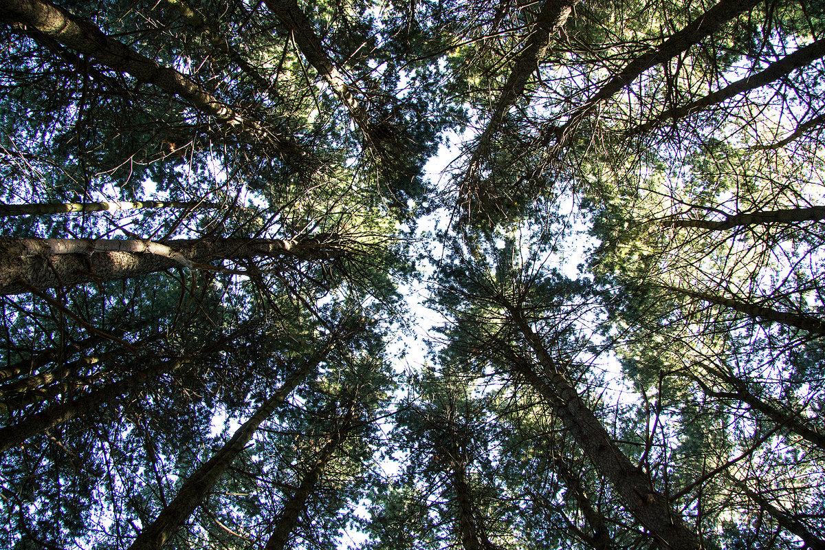 Съезд деревьев - Эрик Делиев
