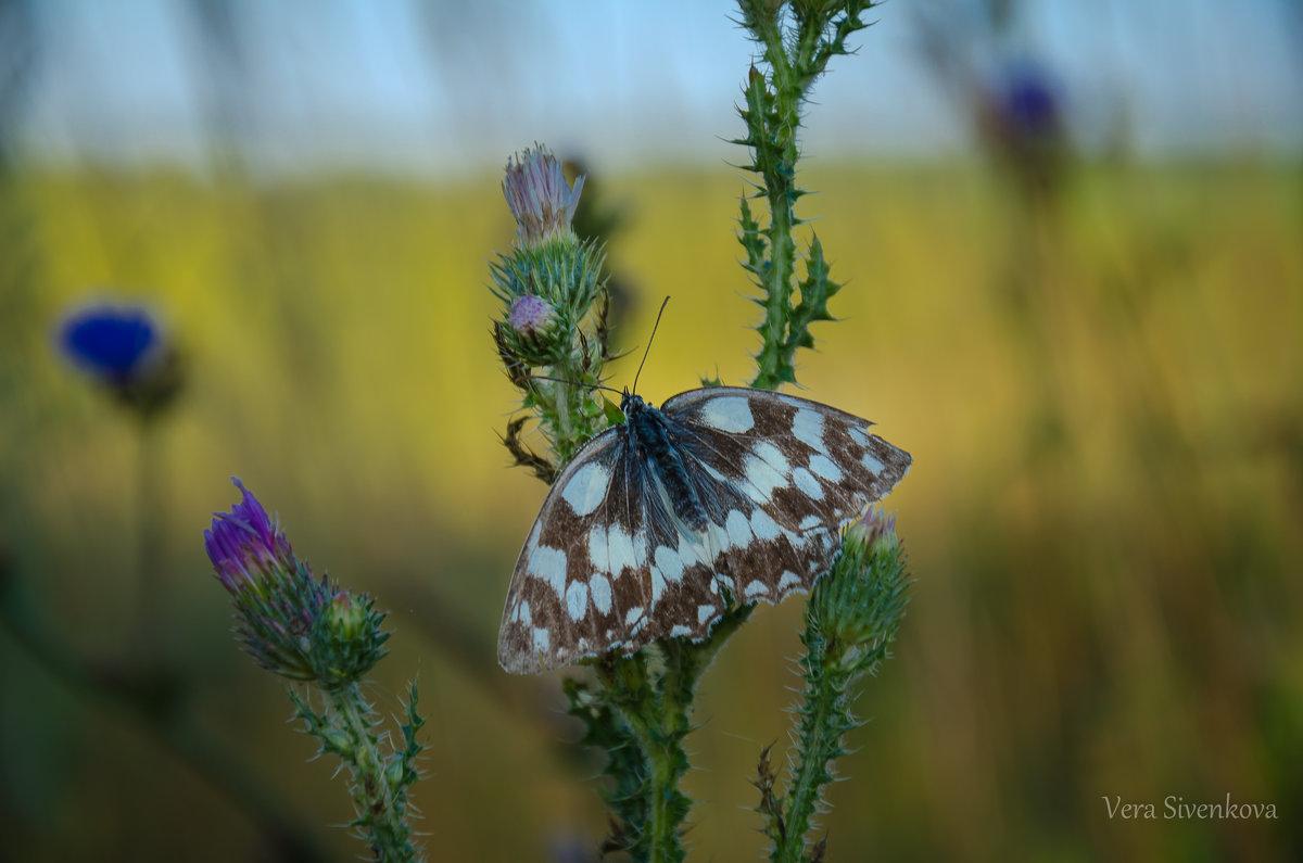 Спящая бабочка - Вера