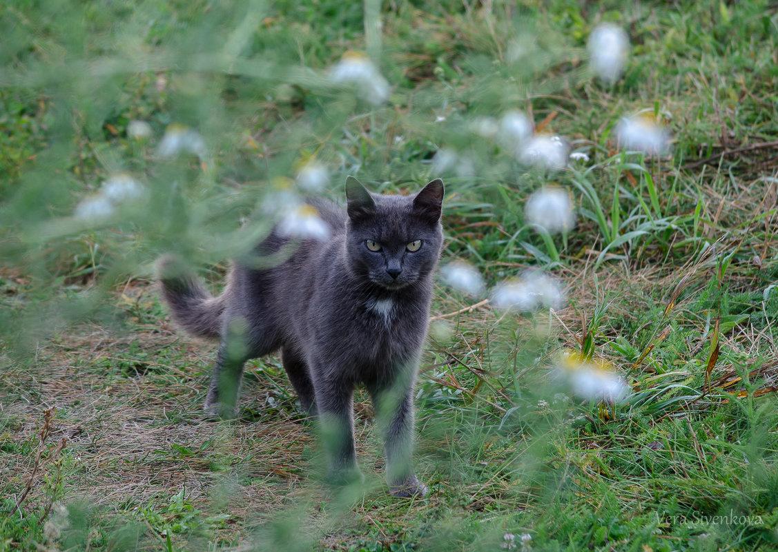 Серьёзный кот - Вера