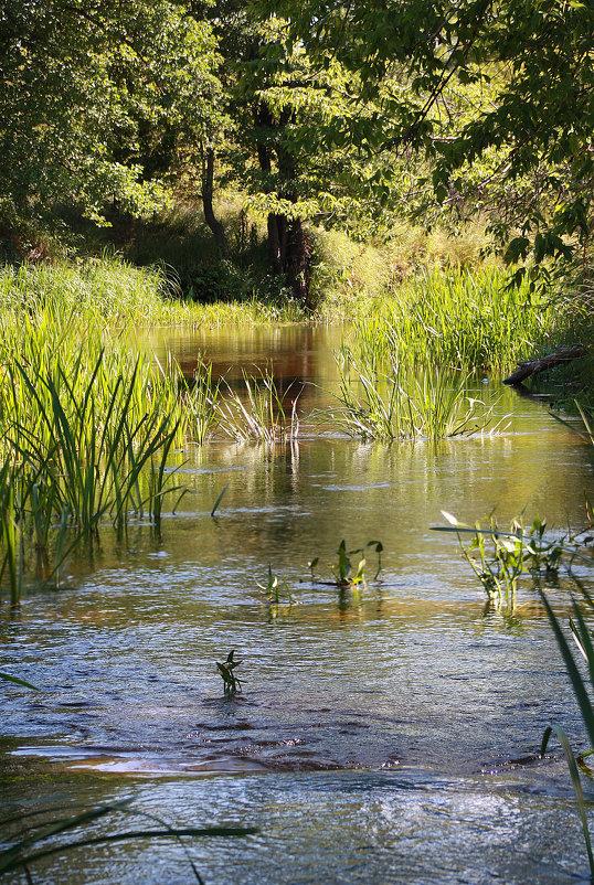 течёт ручей, бежит ручей... - Виктор _