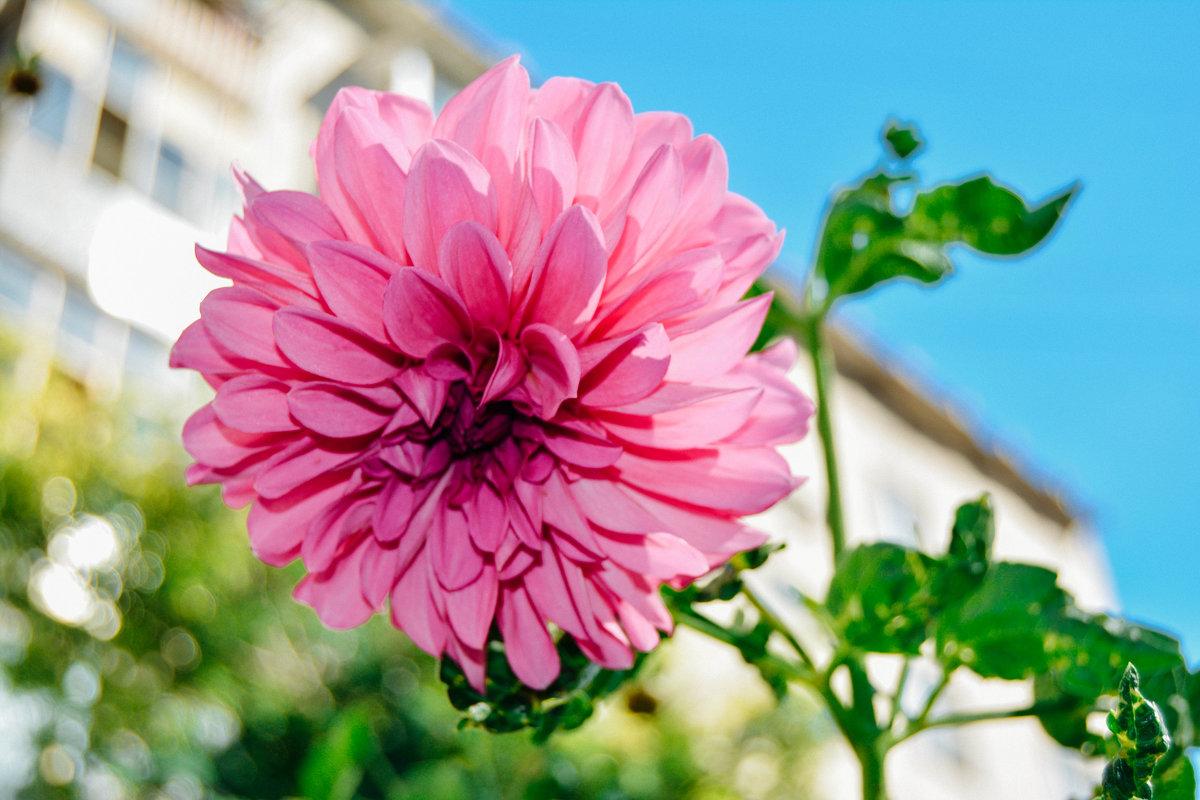 цветок во дворе - Света Кондрашова
