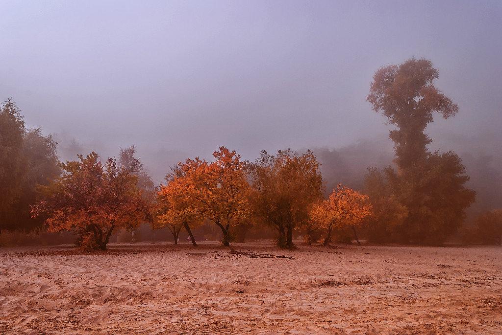 Осенним утром под окном,  туман посорился с дождем... - Павел