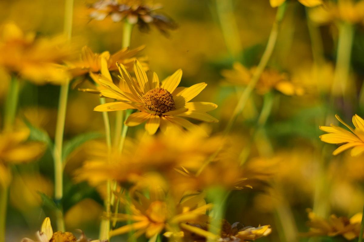 Желтые цветочки - Иван Птушкин
