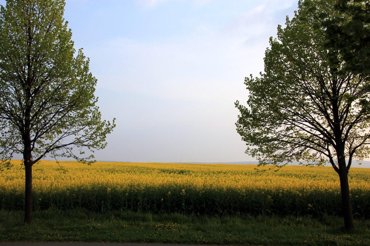 пейзаж в желтых тонах - Olga