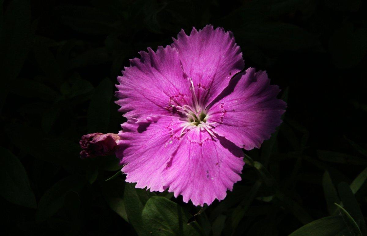 Цветок в тени - Damir Si