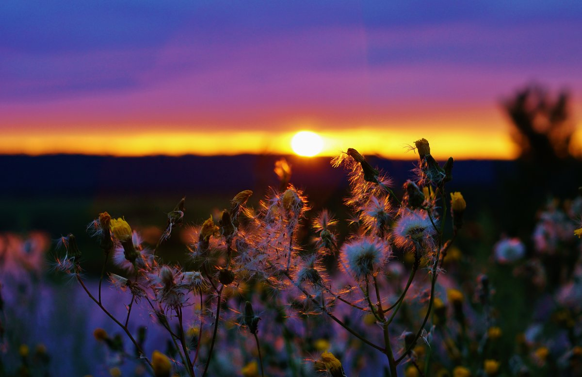Сияет вечер разными цветами! - Валентина Налетова