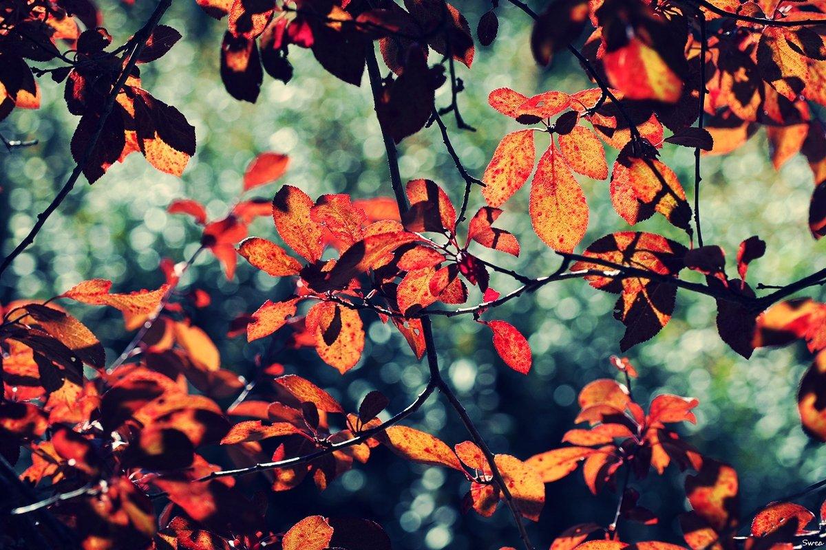 Осенний коллаж - Swetlana V
