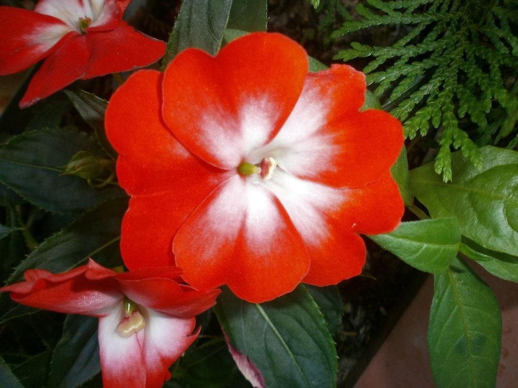 Цветочек....аленький - Алёна Савина