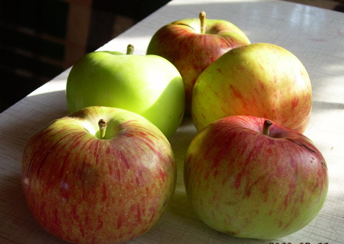 Яблоки нового урожая - татьяна
