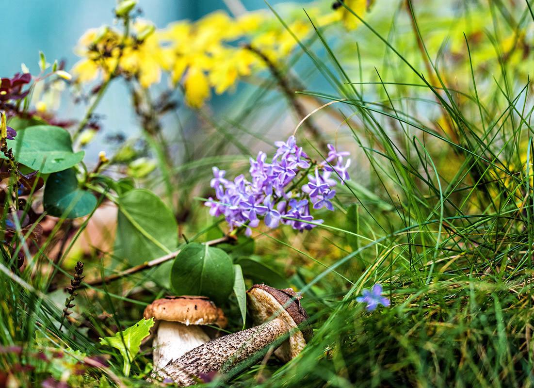 В сентябре цветет сирень - Борис Устюжанин
