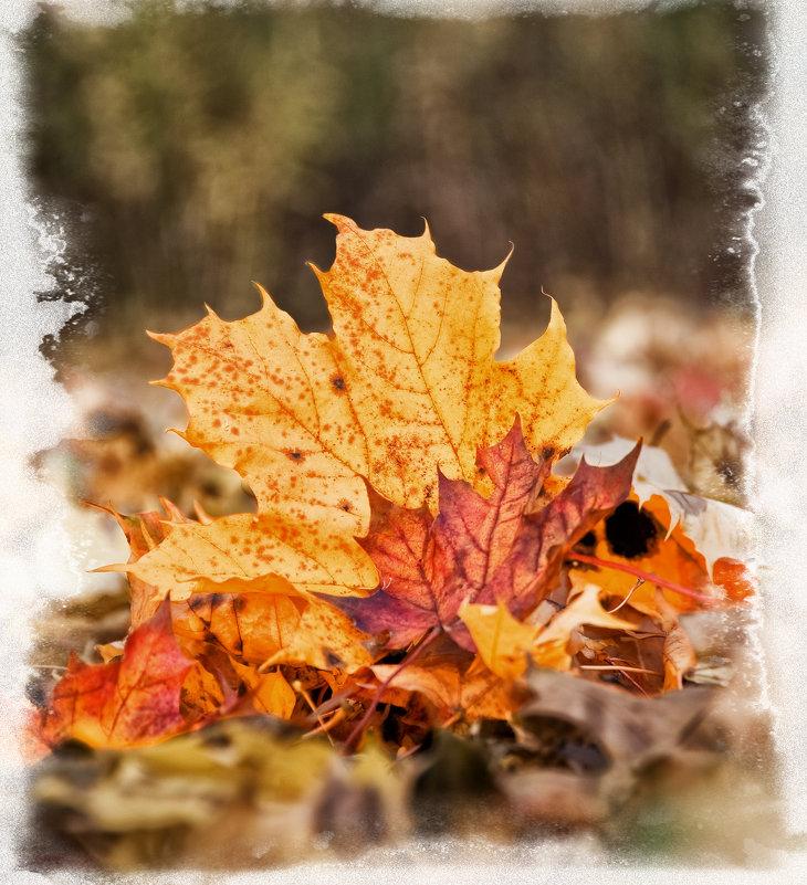 Осень - Alexander Dementev