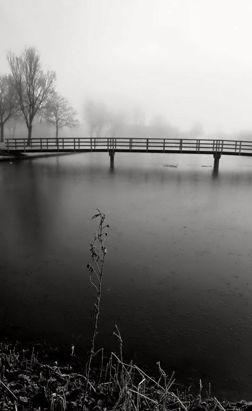 Утро туманное - Светлана Щербакова