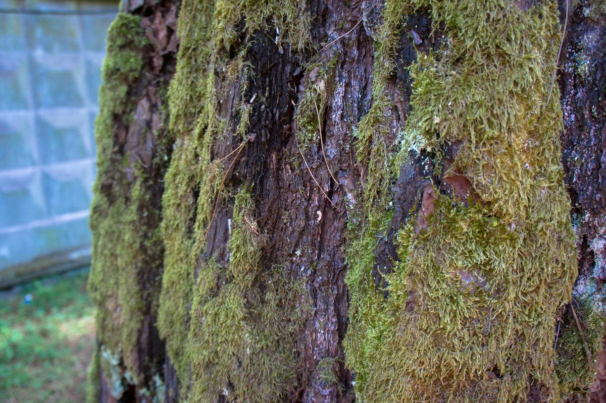Мох на дереве - Андрей Наумов