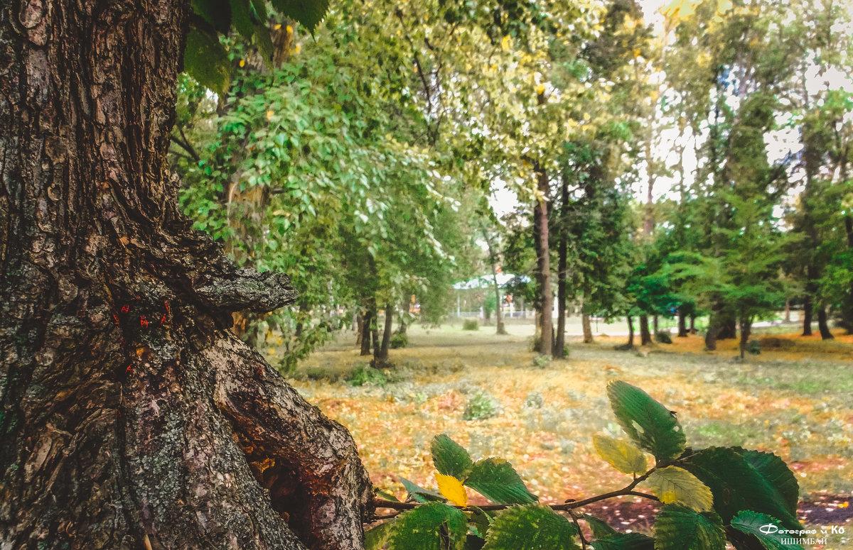Взгляд из за дерева - Вячеслав Баширов
