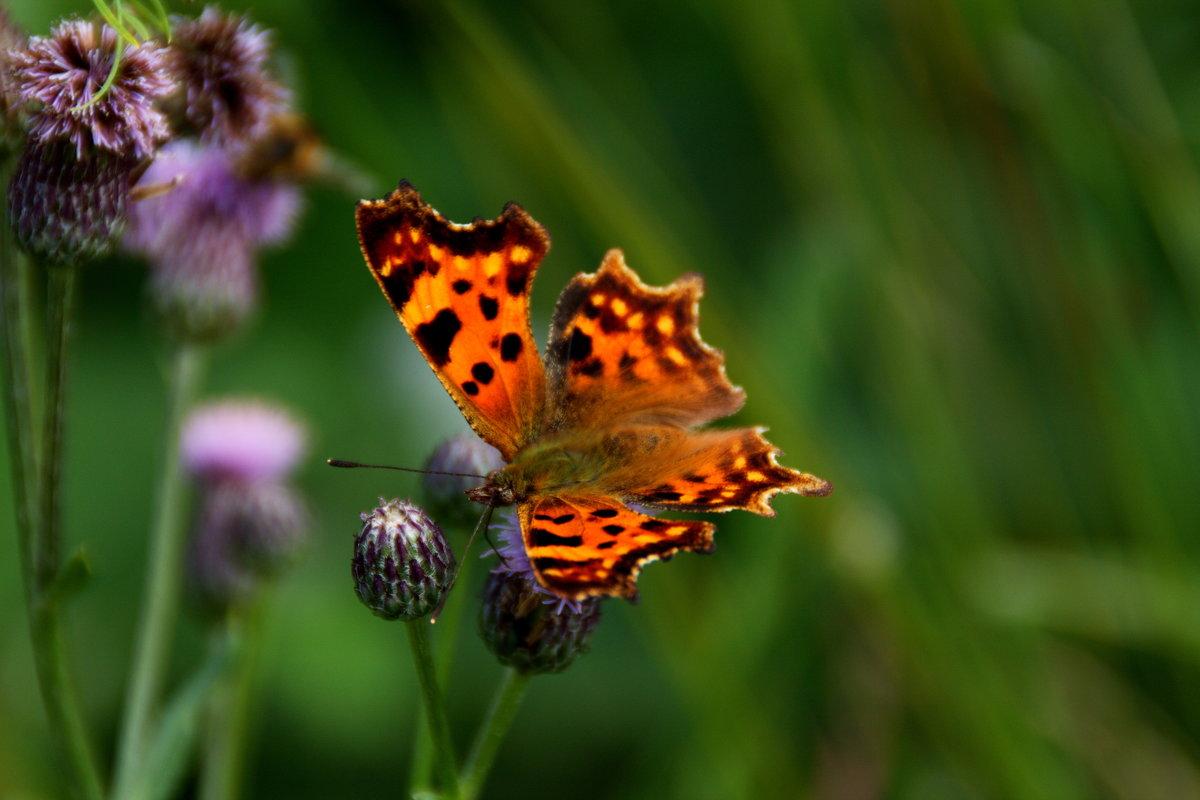 бабочка - Сергей