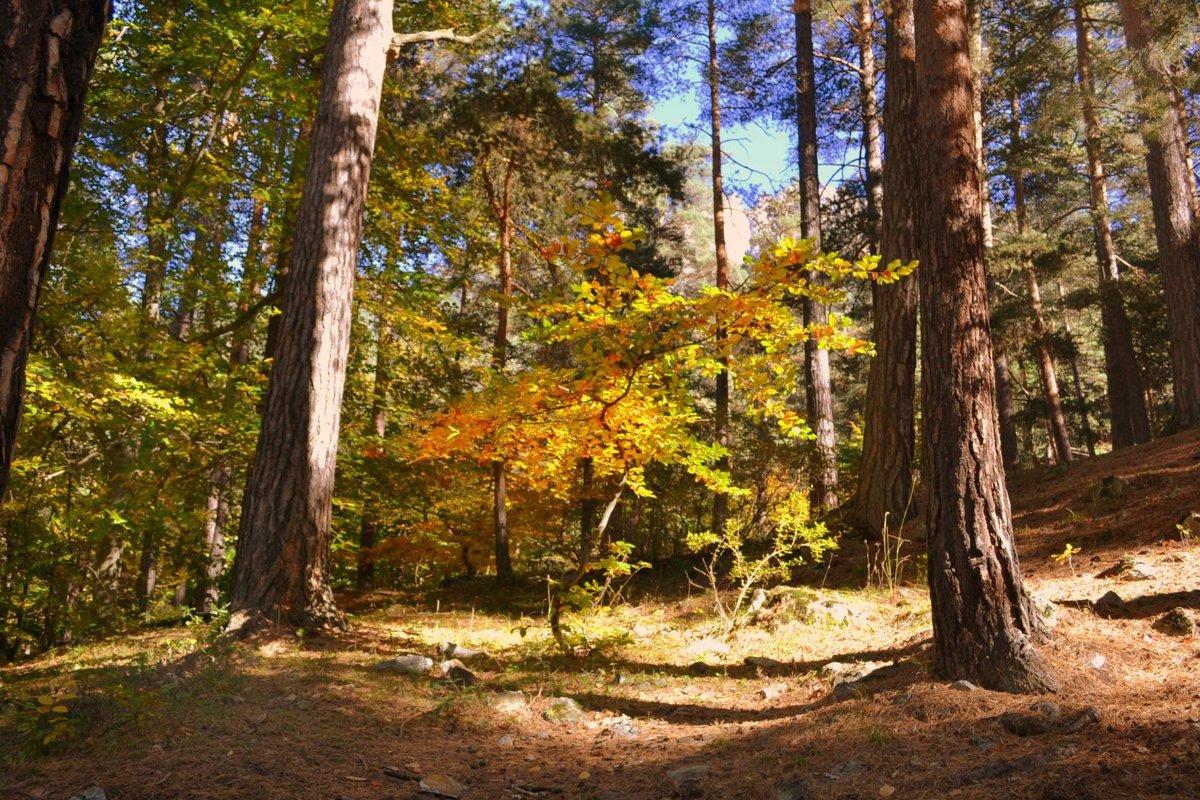 Осень - Клара