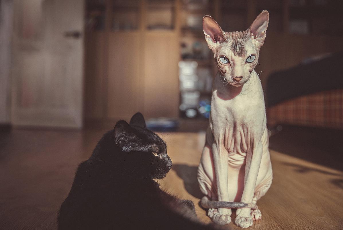 Такие разные кошки - Анна Вязьмина-Кирилюк