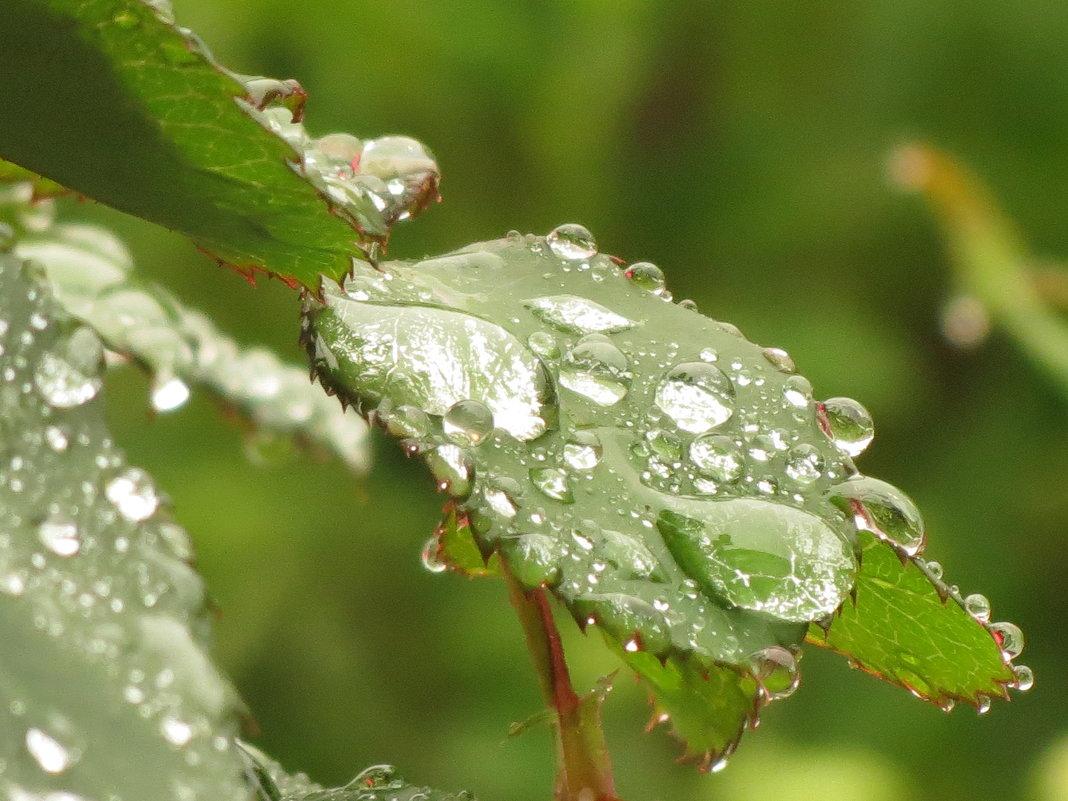 После дождика - Михаил Цегалко
