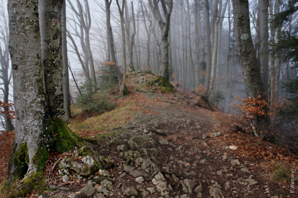 туманный лес - Elena Wymann