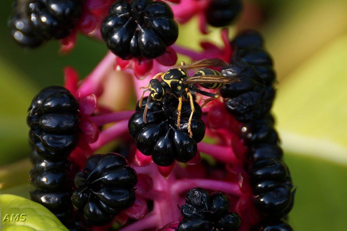 Красота осенняя - kolyeretka