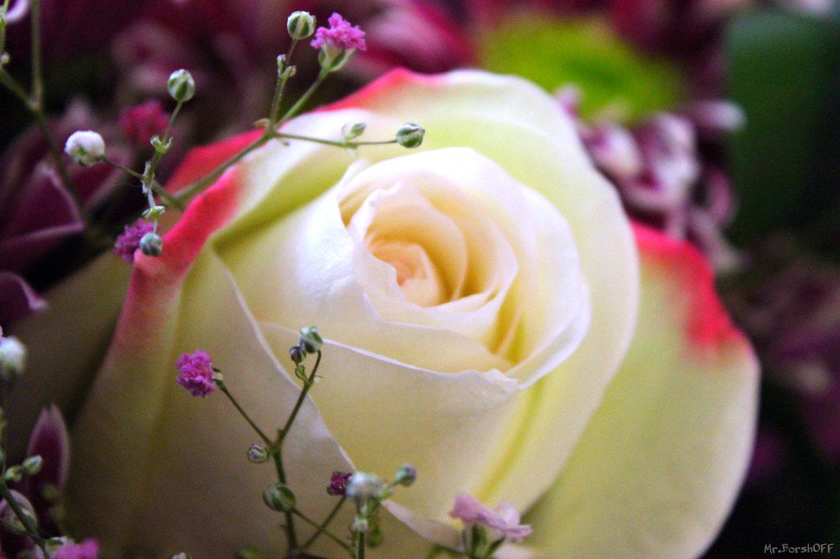 White Roses - Константин
