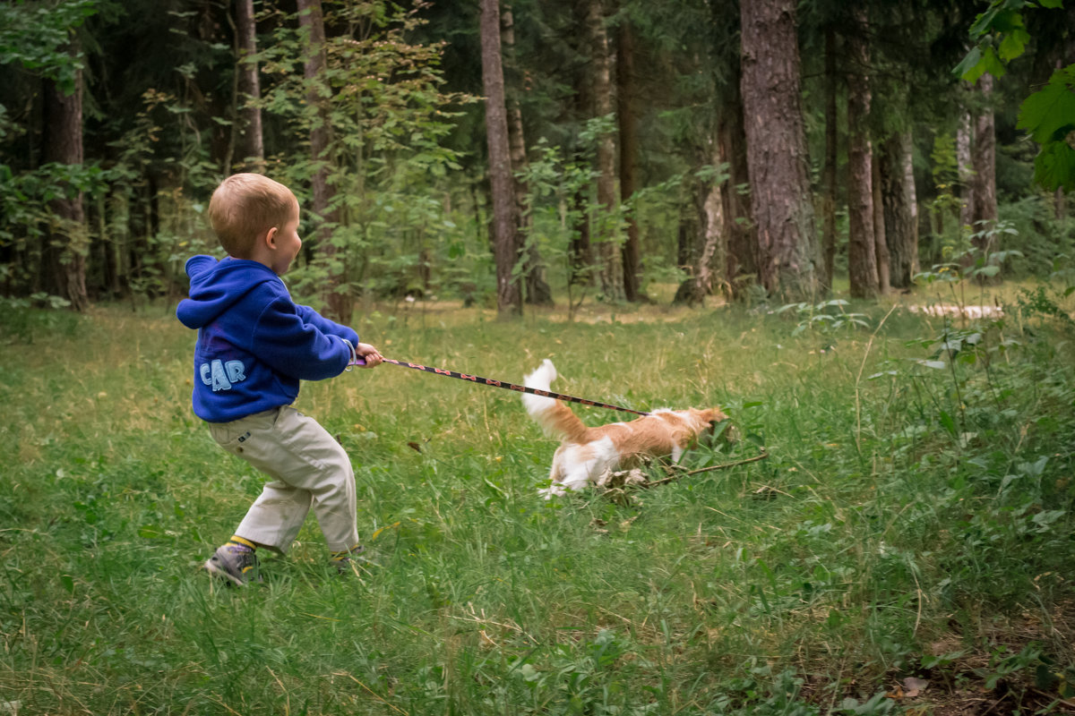 Прогулка с собакой - Алексей Леухин