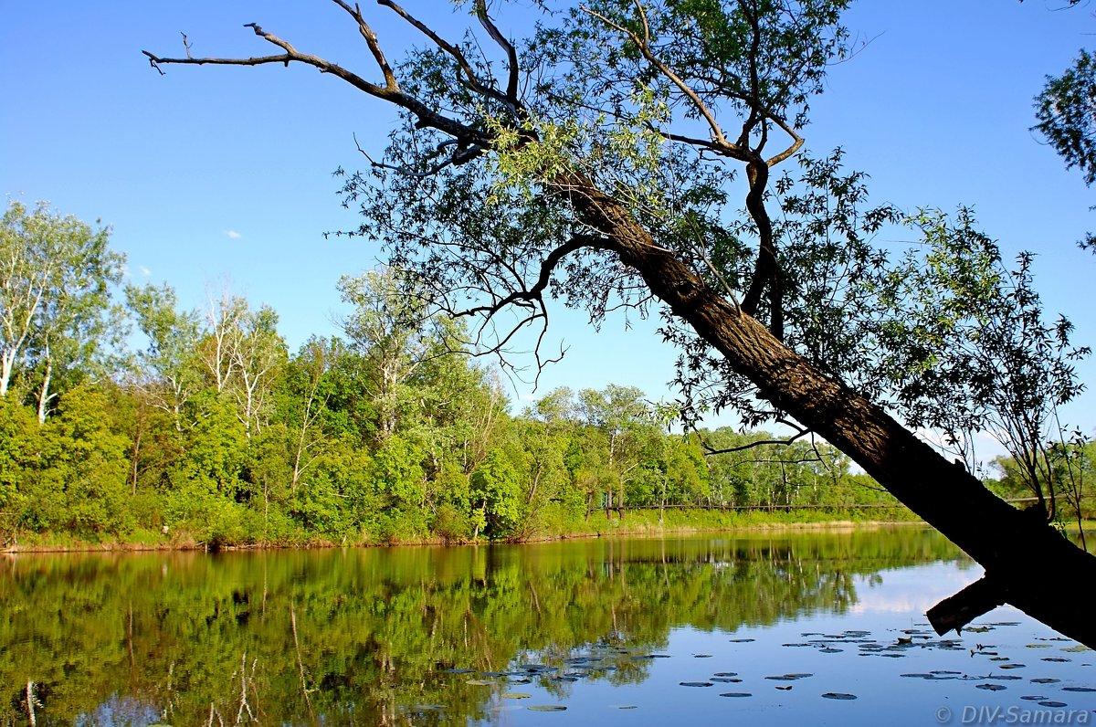 Старица реки Самара - Денис Кораблёв