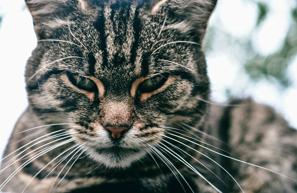 кошка Анфиса - Мария Родионова