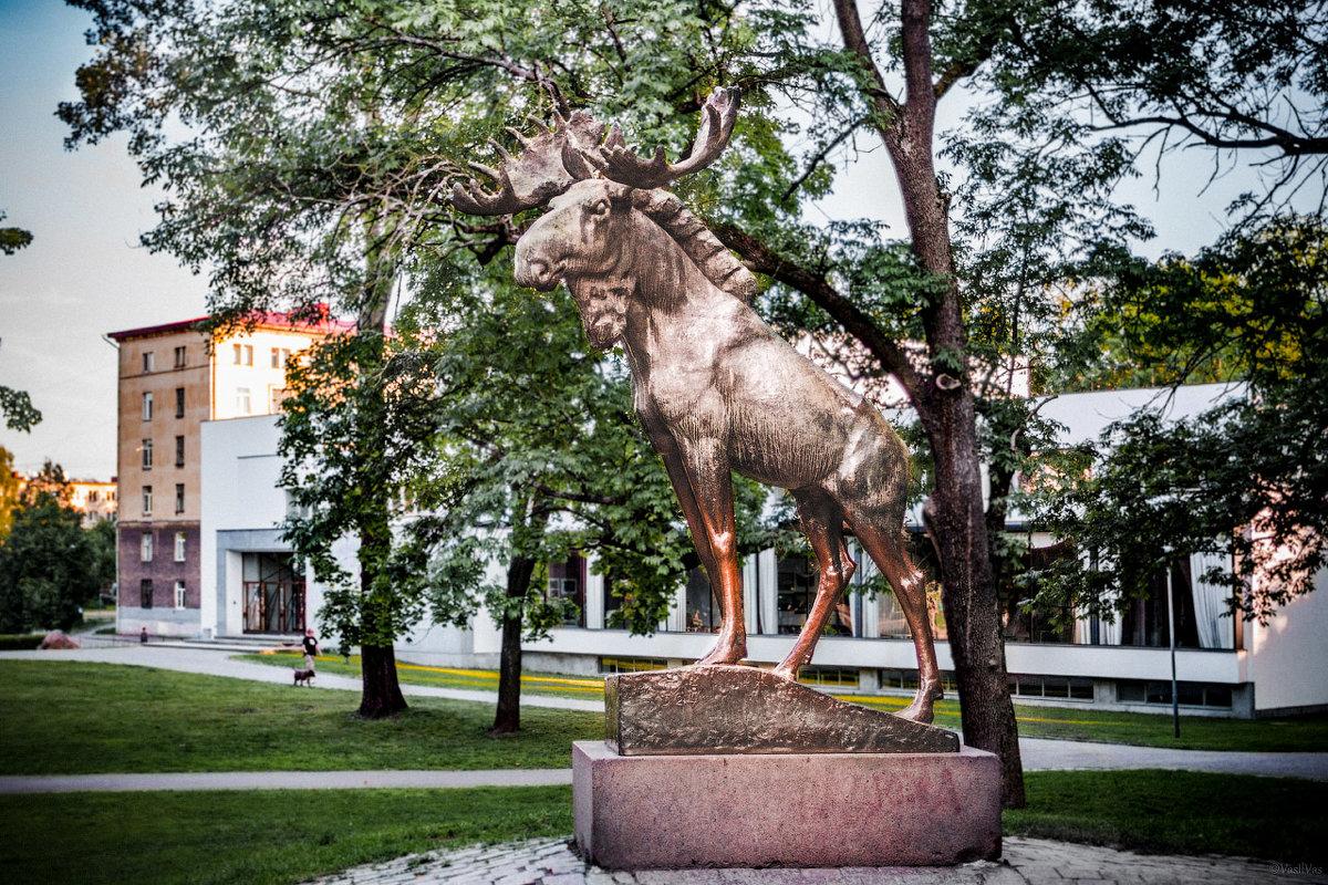 Elk - Илья В.
