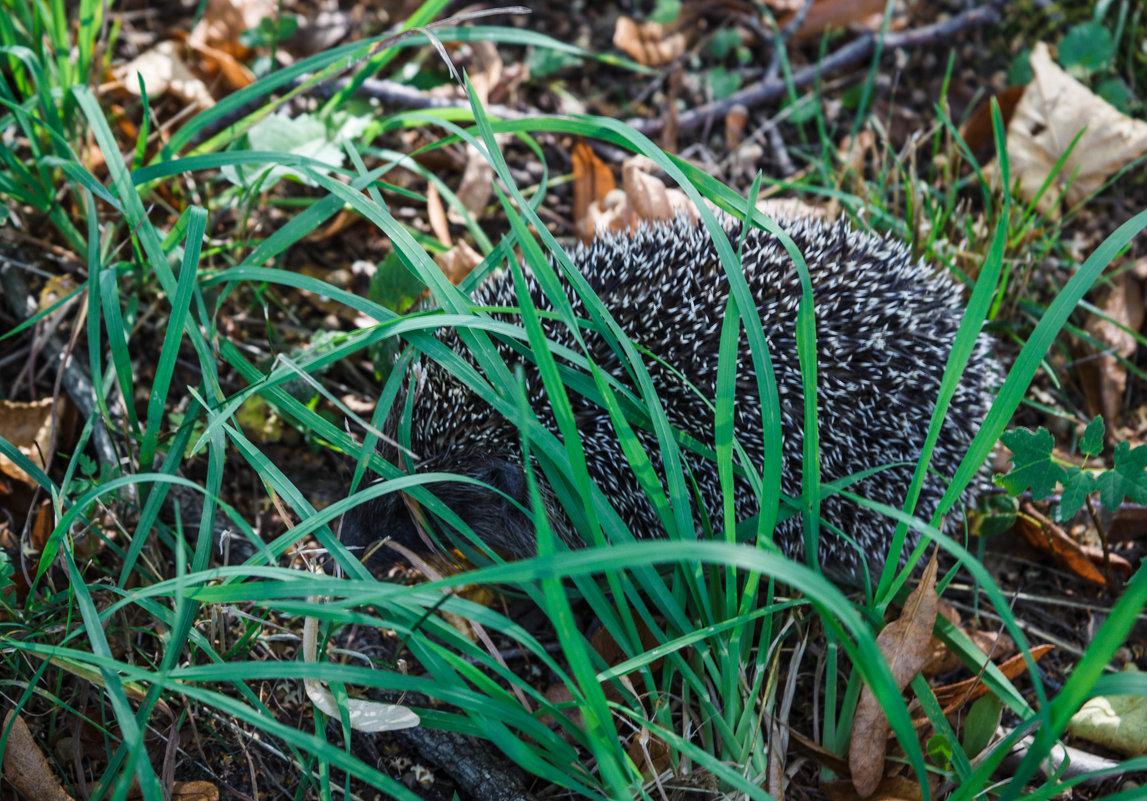 Вот кто то спрятался в траве.. - Андрей Нибылица