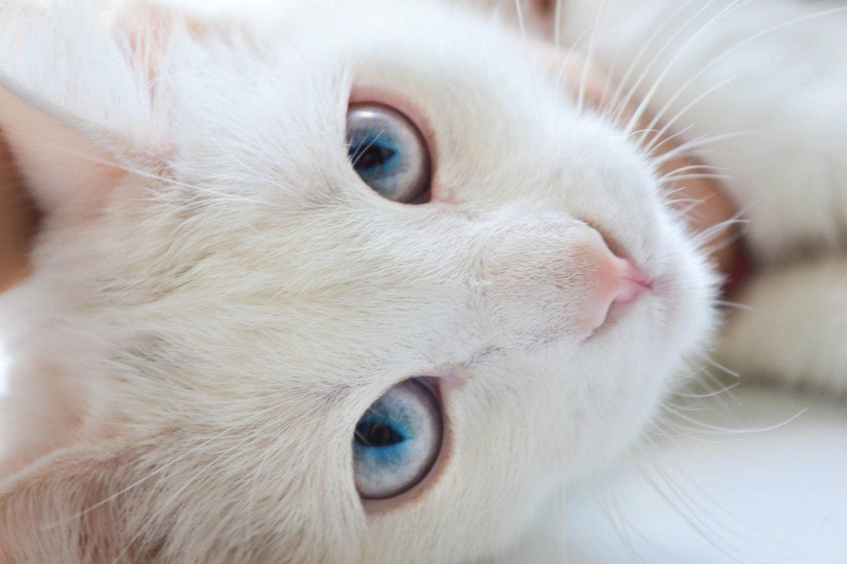 Кошачий взгляд - Julia Tyagunova