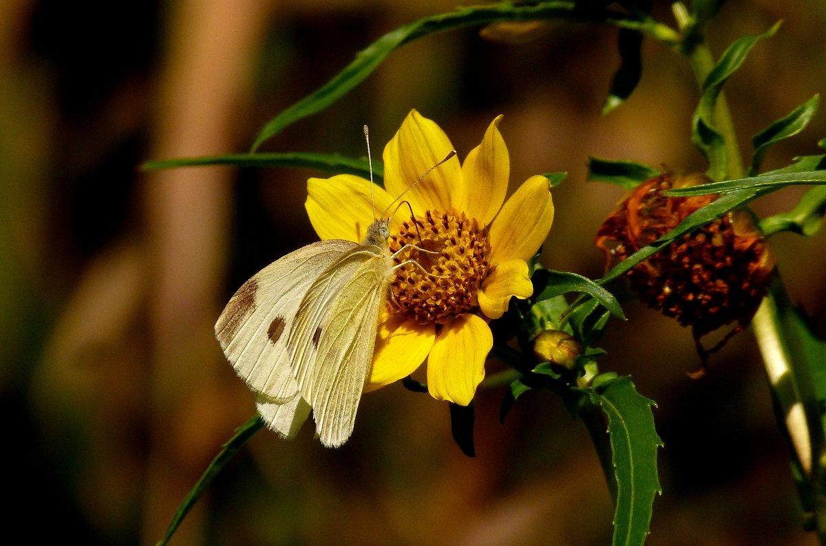 белая на желтом - Александр Прокудин