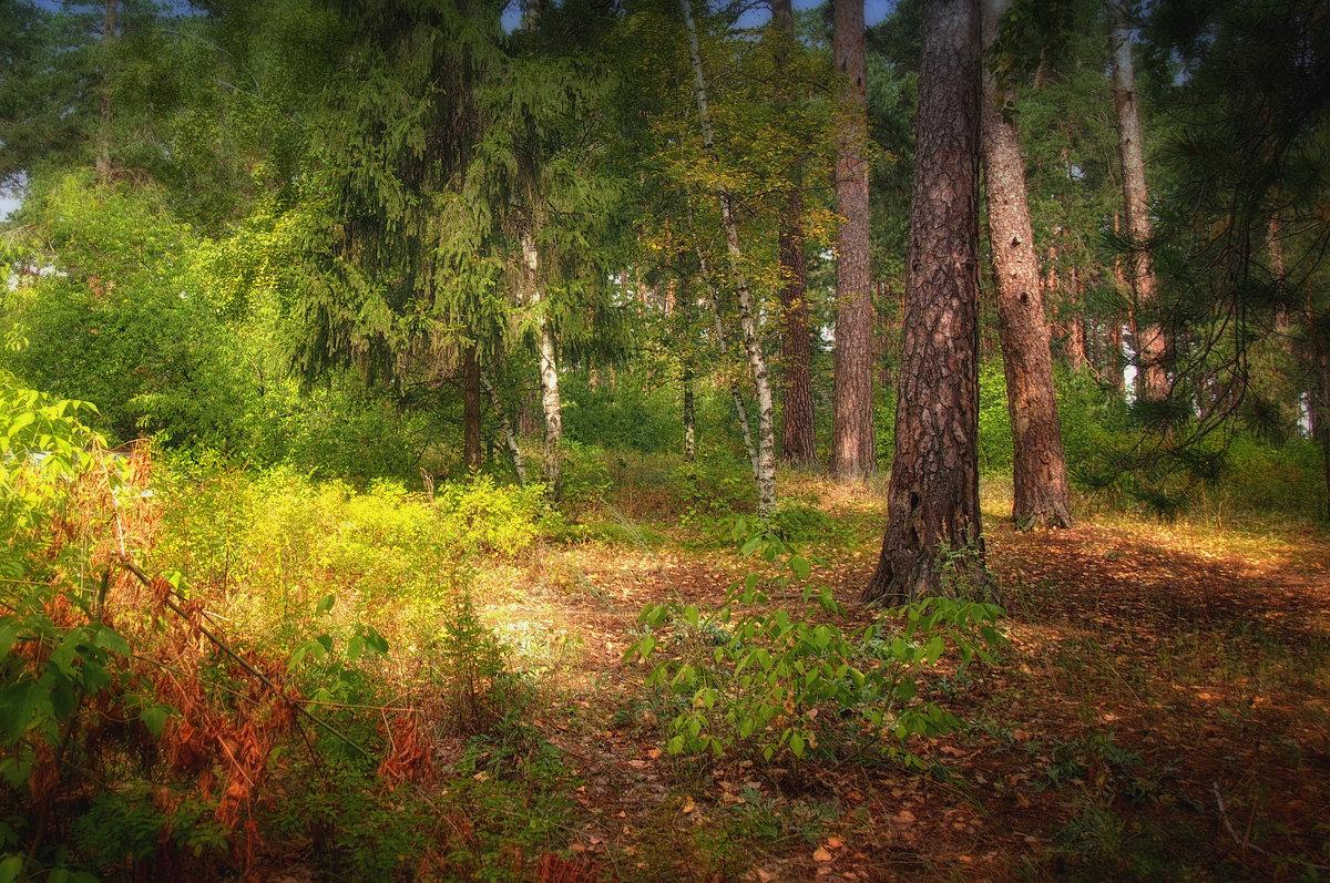в лесу - Ирина ***