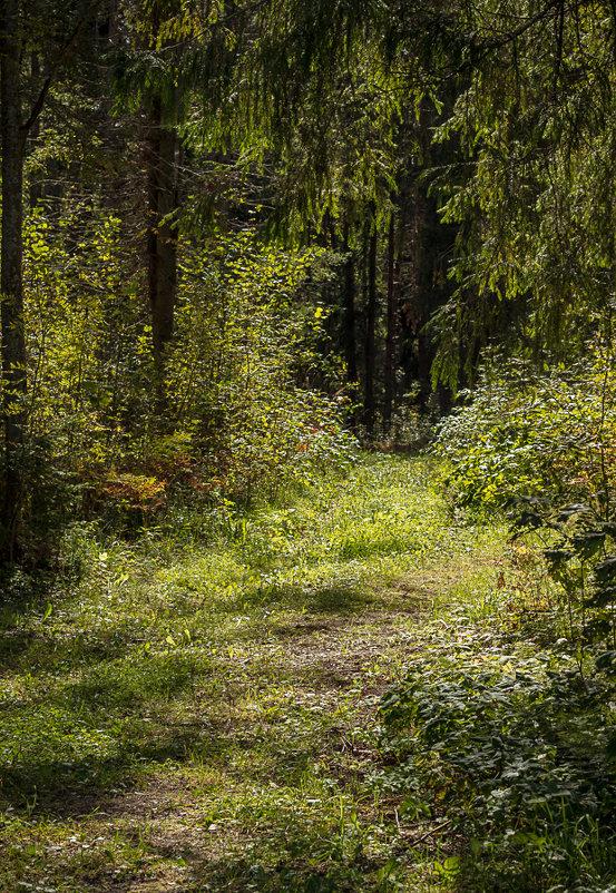 Тропы лесные - Alhna ---